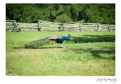 The Stanfields | Magnolia Gardens - Charleston, SC